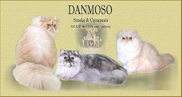 cattery Danmoso