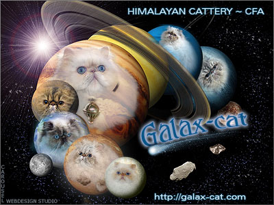 Cattery Galax-Cat