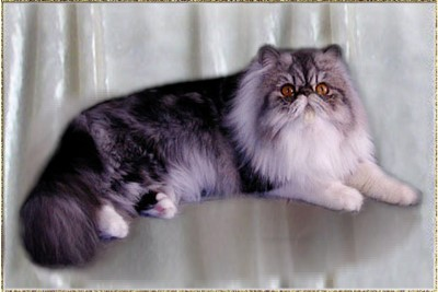 Brettonpark What's In A Name ... Silver-Tabby-White classic female 3 years old